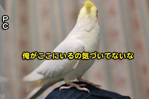 8DSC_2075.jpg