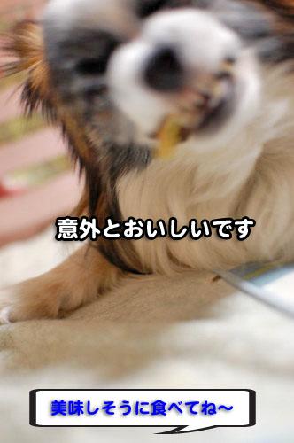 9DSC_2108.jpg