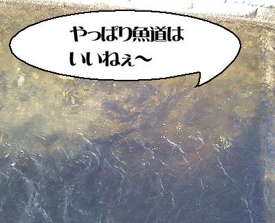 20080405SBSH0007.jpg