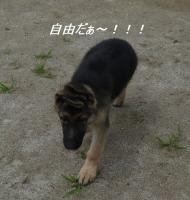 デビュー2