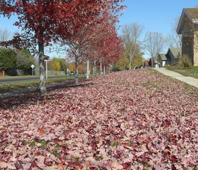 autumn1.jpg