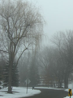 fog02.jpg