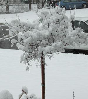 snow0405092.jpg