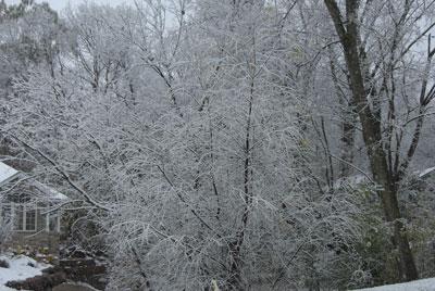 snow110708.jpg