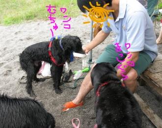 Img_0105-osusowake-614.jpg