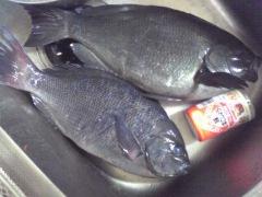 photo masahiro 1 25