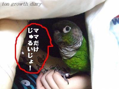 12_15.jpg