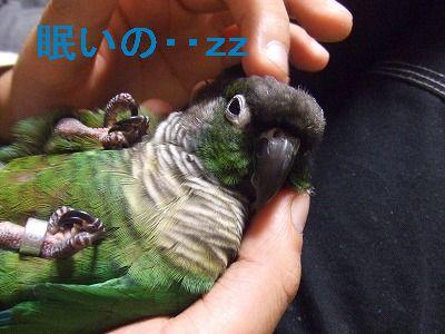 2008_09280020-1.jpg