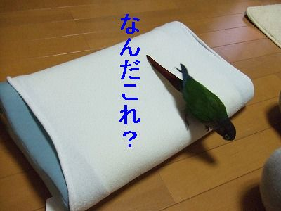 8_24.jpg