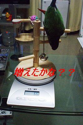 DSC02842_.jpg