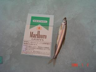 20060103013619.jpg