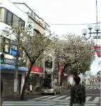 20070415_sakura