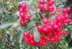 20071127_garden_pira.jpg