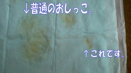 20081103145555.jpg