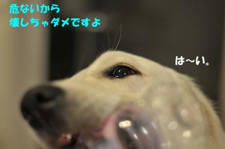 DSC_4320.jpg
