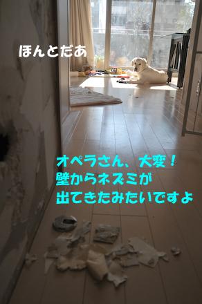 DSC_4351.jpg