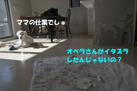 DSC_4353.jpg
