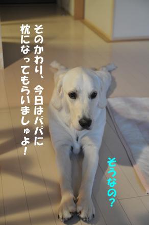 DSC_4522.jpg