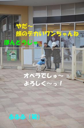 DSC_4588.jpg