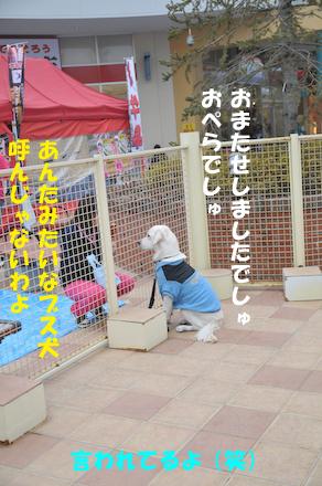 DSC_4595.jpg