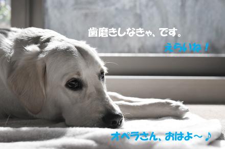 DSC_4872-2.jpg
