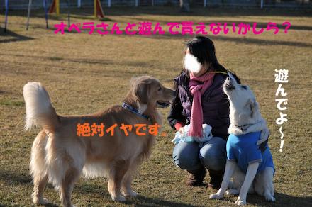 DSC_5037.jpg