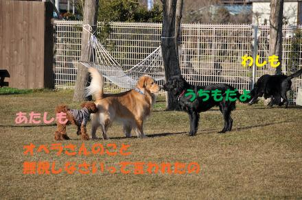 DSC_5038.jpg