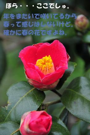 DSC_5525_20090212005001.jpg