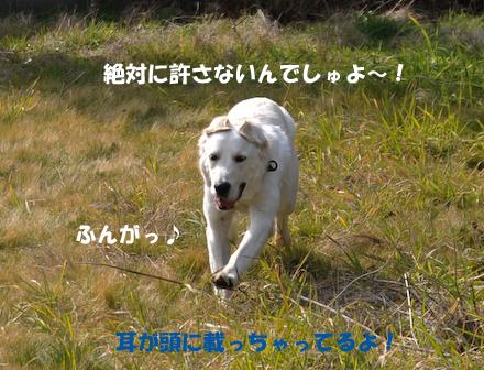 DSC_5838.jpg