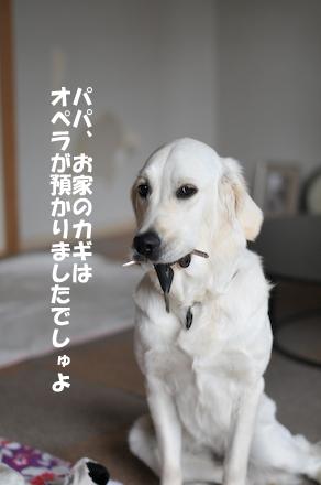 DSC_5976.jpg