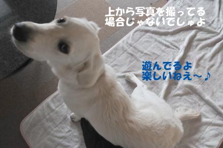 DSC_5988.jpg