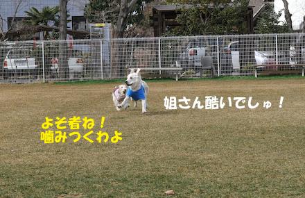 DSC_6131.jpg