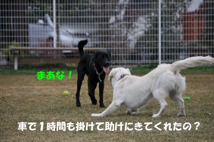 DSC_6460.jpg