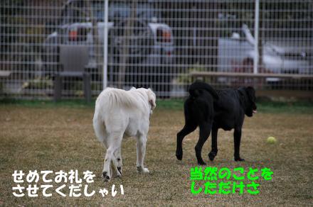 DSC_6462.jpg