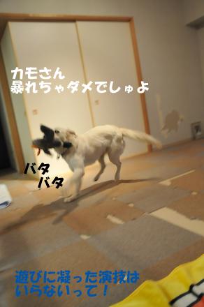 DSC_6570.jpg