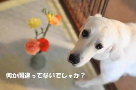 DSC_6704.jpg