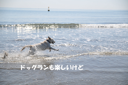 DSC_6781.jpg