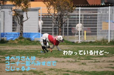 DSC_7135.jpg