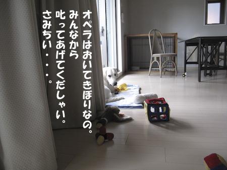 IMG_0452.jpg