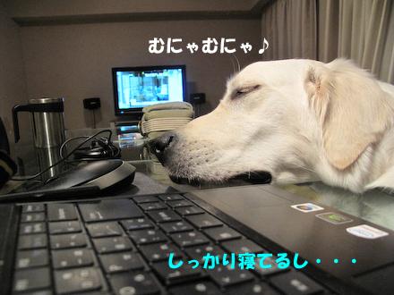 IMG_0930.jpg