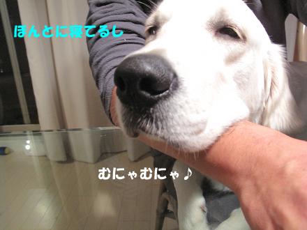 IMG_0933.jpg
