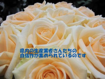 IMG_1381.jpg