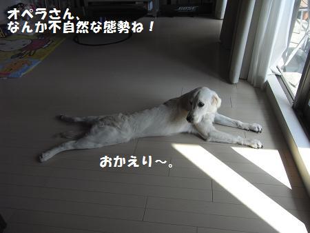 RIMG0025_20081023012015.jpg