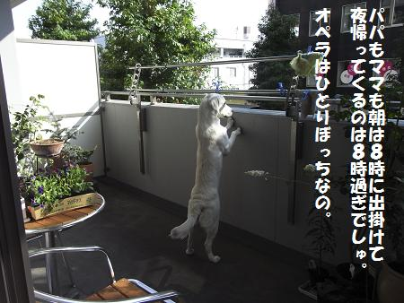 RIMG0038_20081018014932.jpg