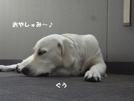 RIMG0049_20081018015458.jpg