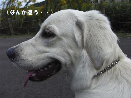 RIMG0072_20081019003922.jpg