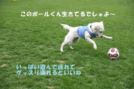_DSC1097.jpg