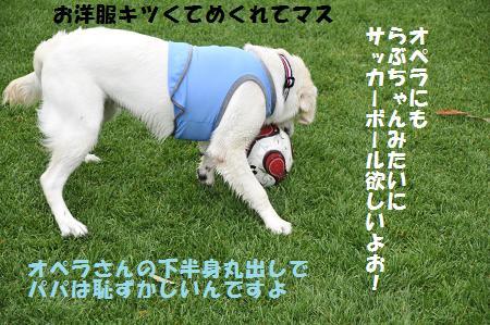 _DSC1106.jpg