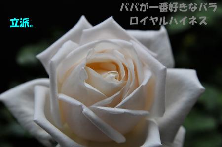 _DSC1892.jpg