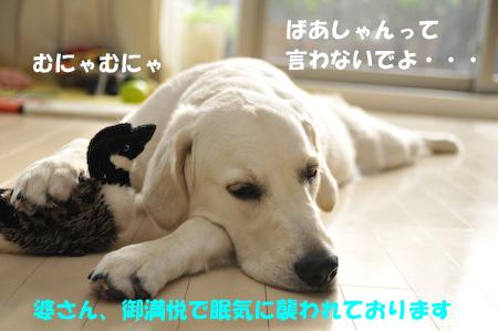 _DSC1907.jpg